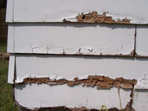 Garage siding rotting and falling apart.