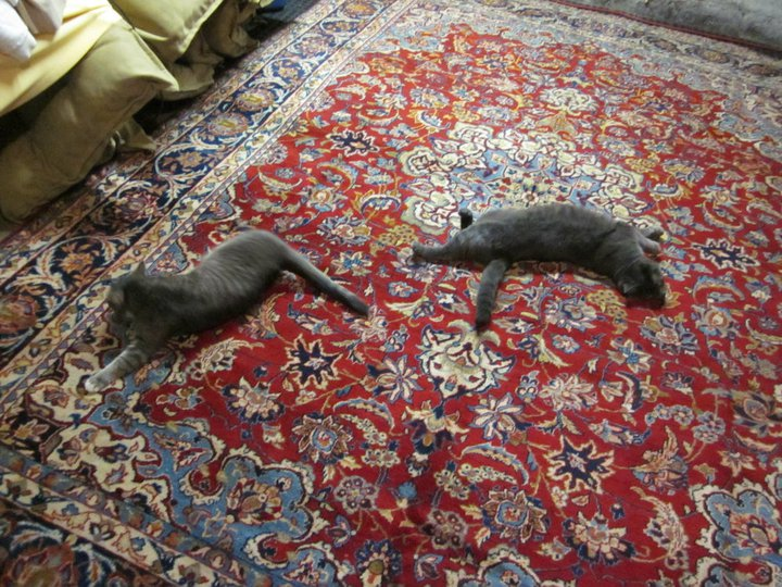 The cats promptly claim ownership of every rug we bring into the house.