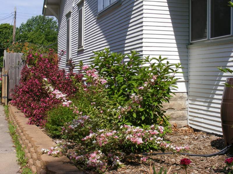 West side of the house in bloom