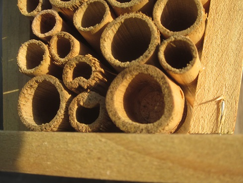 mason bee nesting