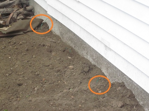 Backfilled trench -- I circled the twist-tie markers in this shot.