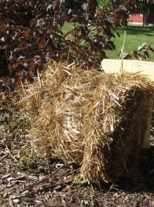 Bales of straw for winter mulch can be picked up at garden retailers.