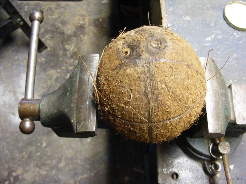 coconut in a vice