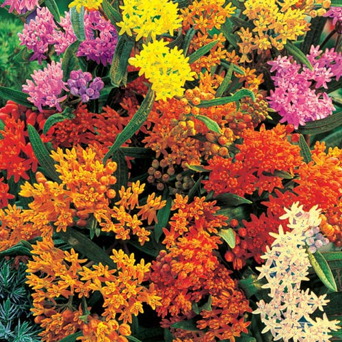 Gurney's Butterfly Flower Mix (via)