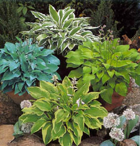 Community sales can be a little hosta-heavy, but who can't use another hosta? (via)