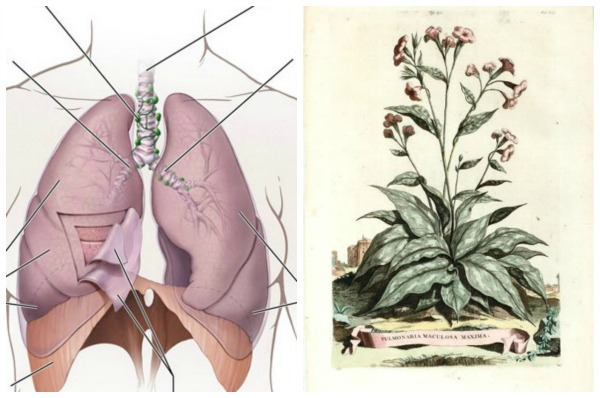 "Early doctors may have been stretching a bit in the ""plants that look like things"" department."