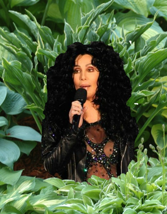 cher and hostas