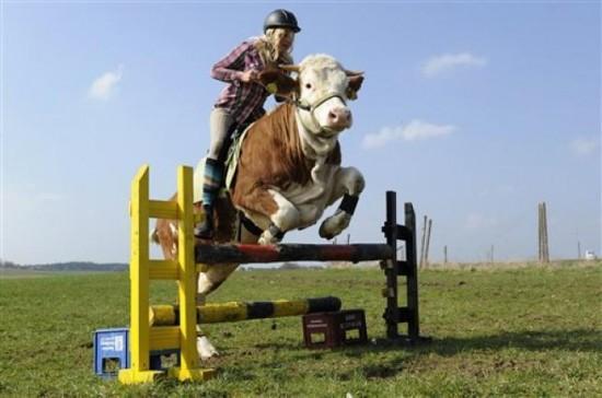 What a cow! (via)
