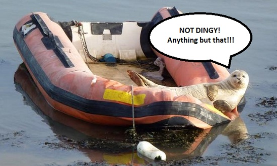 seal in a dinghy